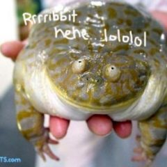 Obese Frog
