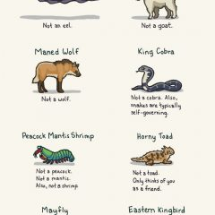 Animals Whose Names Aren't What They Really Are [Photo]