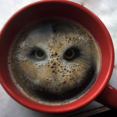 Start Your Day With A Hoot [Photo]