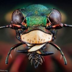 A Beautiful But Scary Motherf**king Insect [Photo]