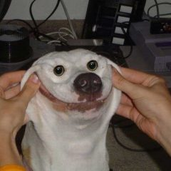 Smiling Dog [Photo]