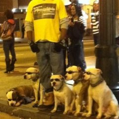 Dogs Wear Their Sunglasses At Night [Photo]