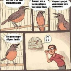 What Caged Birds Are Really Singing About [Photo]