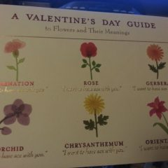 What Those Valentine's Day Flowers Really Mean [Photo]