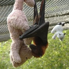Bat Baby And Teddy [Photo]