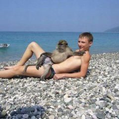A Monkey And His Man Lounge On The Beach. [Photo]