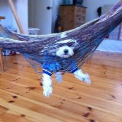 Dog Caught In A Hammock. [Photo]