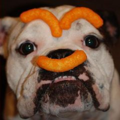Cheetos Dog [Photo]
