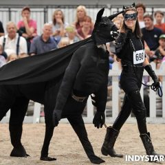 Here's a Llama That's Dressed Up as Batman