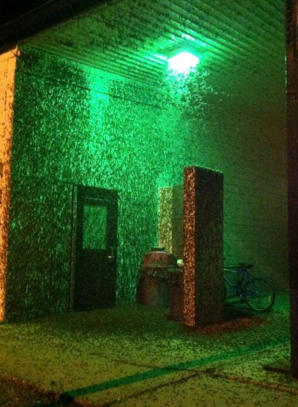 La Crosse Mayfly invasion