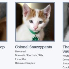 Kick-Ass Cat Names