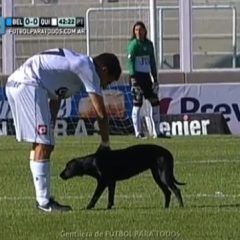 Dog Wanders Through Soccer Match, Wants to Be Pet